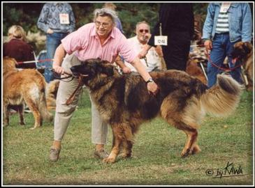 L'utilité d'un chien dans le cadre de la survie Muetti-leonberg